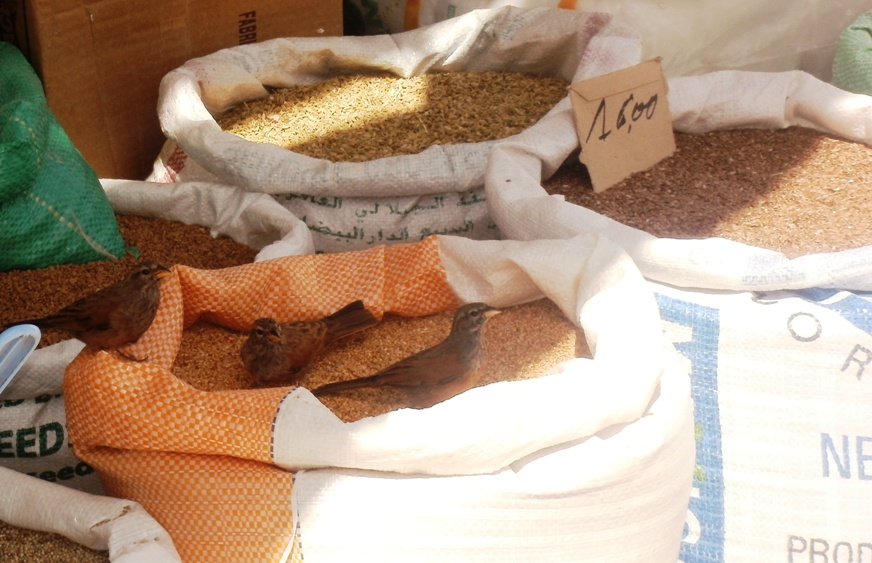Help yourself! Birds outside a grocery store, Essaouira, Morocco