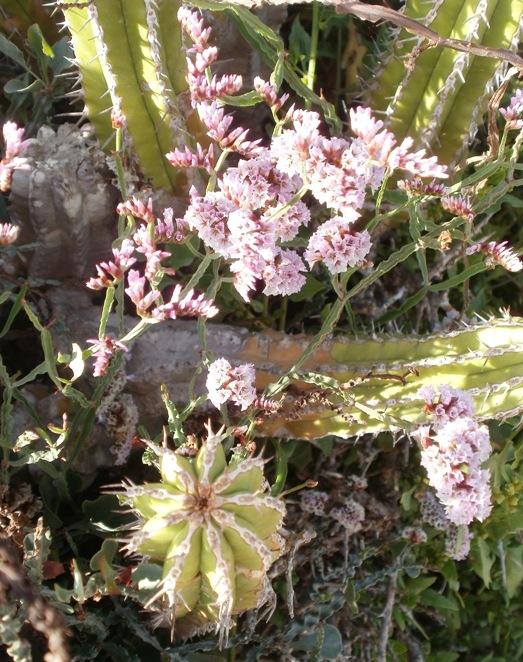 Moroccan Flora