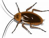 cockroach clipart, public domain image