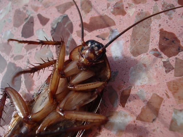 dead cockroach public domain image