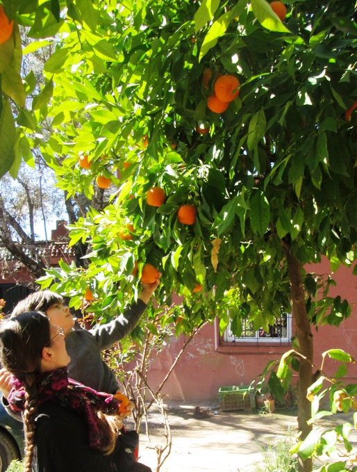 FreeToBeP picking an orange earlier this year